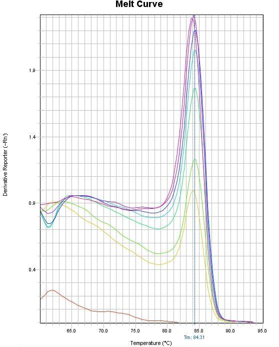 融解曲線分析